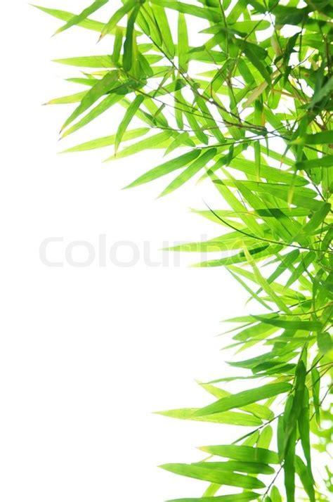 background design leaves green bamboo leaf background border design stock photo
