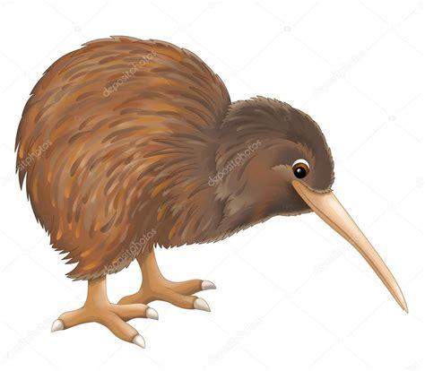 imagenes de animal kiwi p 225 jaro kivi foto de stock 169 agaes8080 40613375