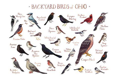 Ohio Backyard Birds Field Guide Art Print / Watercolor