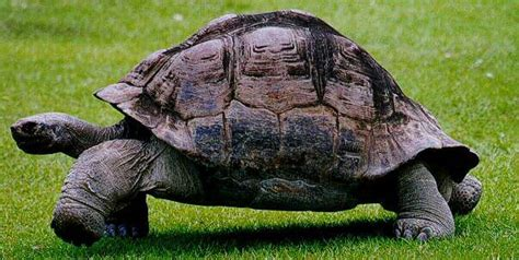 imagenes animales que reptan descubriendo los animales