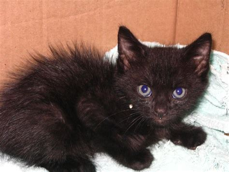 black fluffy puppies and kittens