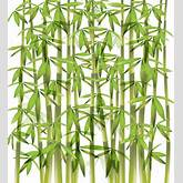 Bamboo Vector Illustration | Free Vector Graphics | All Free Web ...