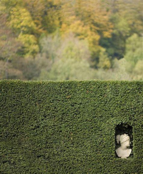 sicht und lärmschutz für den garten hecke zaun idee
