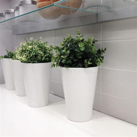 vasi bianchi moderni tre vasi bianchi moderni in una fila immagine stock