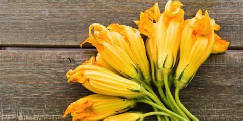 fiori di zucchina come cucinarli i fiori di zucca come pulirli e cucinarli