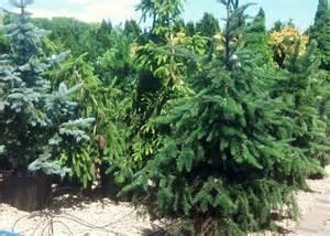 Container Gardening Colorado - landscape shop hop lowney s katie jane interiors