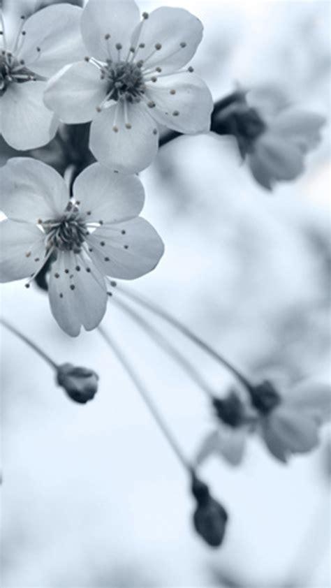 flower wallpaper grey grey flowers moto e wallpapers moto e wallpaper