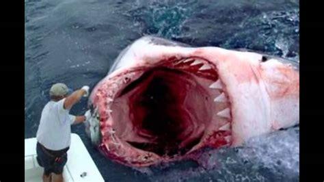 what is the biggest boat in the whole wide world мегаладон существует самая большая в мире акула youtube