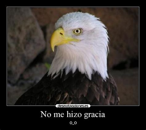 imagenes reales frases imagenes de aguilas reales con frases imagui