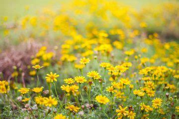 rullo giardino fai da te rullo arieggiatore fai da te fai da te in giardino