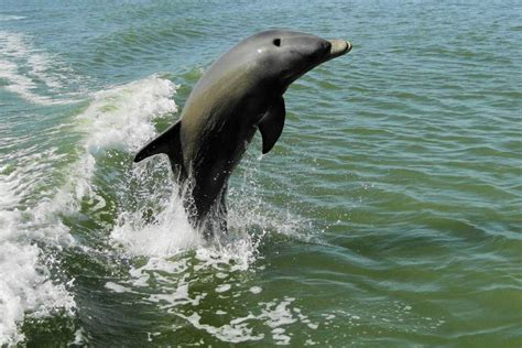 fort myers boat tours fort myers sailing trips boat tours getyourguide
