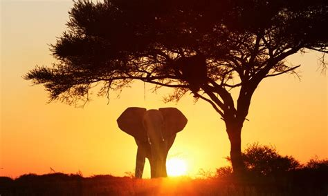 12 day classic south africa gate 1 travel south africa tour and safari with hotels and air from gate