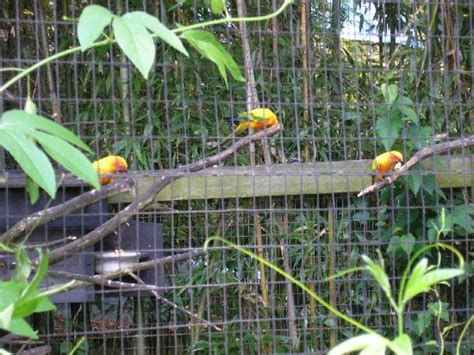 Small Vacation House Plans beautiful birds at salisbury zoo picture of salisbury