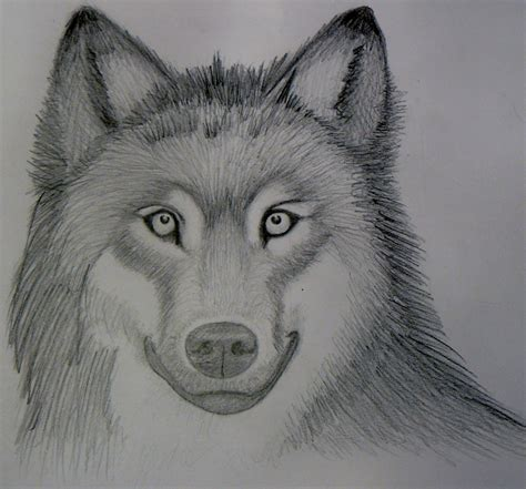 how to draw by markcrilley realistic wolf sketch crilley by foreverstrawberries