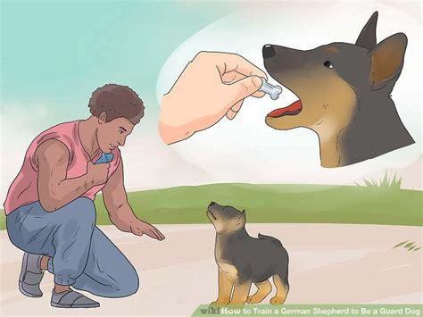 how to a puppy to be a guard how to a german shepherd to be a guard with pictures