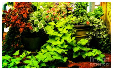patio plants photograph by olahs photography