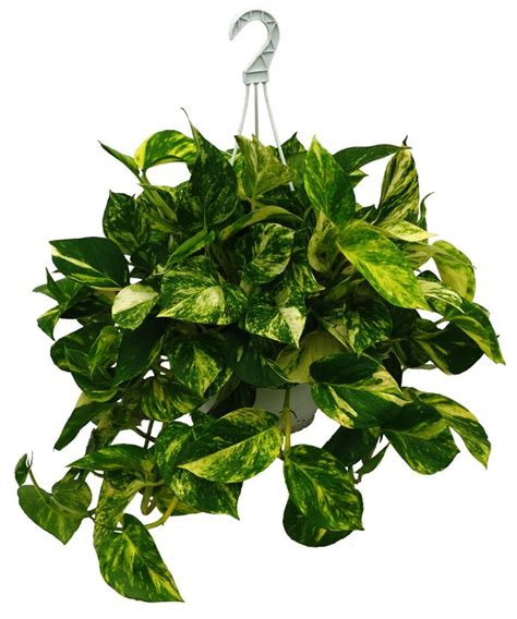 air purifying plants   home office