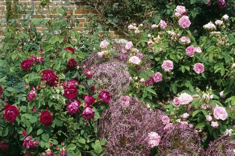 facing climbing plants alan titchmarsh on growing plants against a wall garden