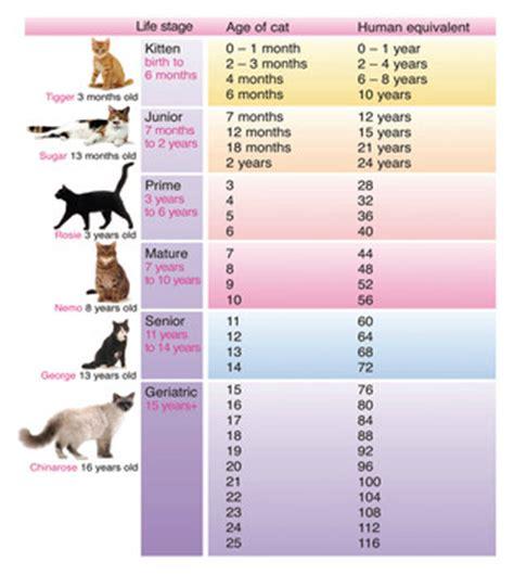 katzenjahre in menschenjahre tabelle wie alt ist meine katze in menschenjahren nfbny