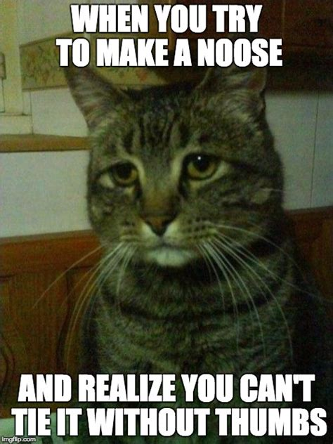 Depressed Cat Meme - depressed cat meme 28 images depressed cat weknowmemes