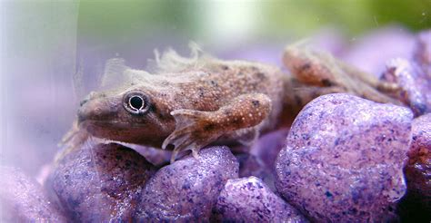 Frog Skin Shedding by Lil Photo Page Everystockphoto