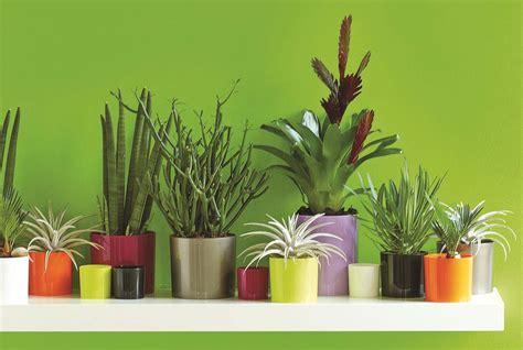 Plantes D Interieur Decoration