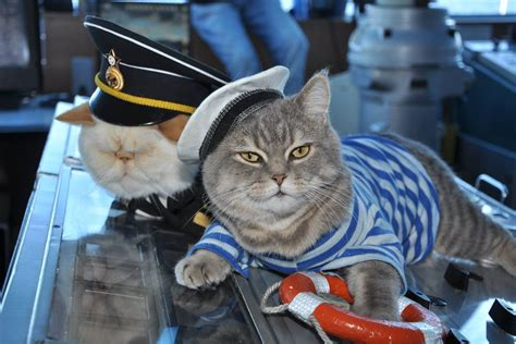captain cat meet the cat captain and first mouser of your russian river cruise the verge