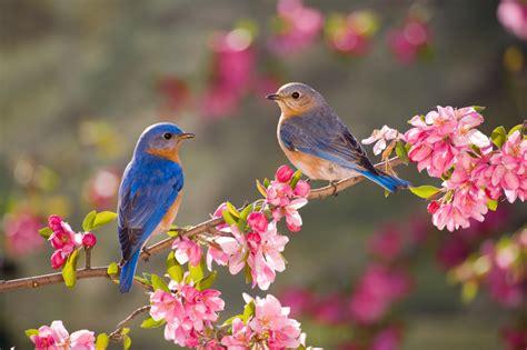 eastern bluebird bird feeder live