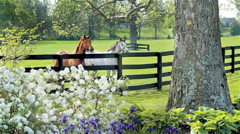 saddle   horse country lexington  georgetown ky