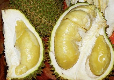 Durian Kupas By Bia Shop taste test durian boing boing