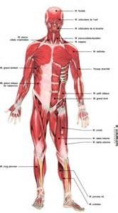 atlas du humain les muscles doctissimo