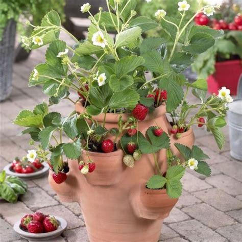 strawberry pot starter kit garden plants resources pinterest gardens beautiful and