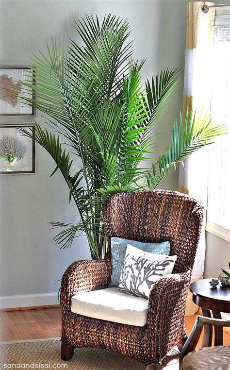 best living room plants 17 best ideas about living room plants on pinterest