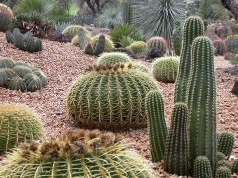 high desert front yard landscaping landscaping ideas desert climate cactus landscaping