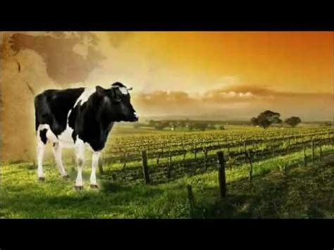 cows save the planet and other improbable ways of restoring soil to heal the earth books milj 216 216 koko page 12