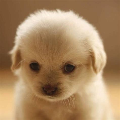 sweet puppy sweet puppy pictures photos and images for and