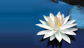 White Lotus Images Free Psychic Tarot Readings And Intuitive Coaching