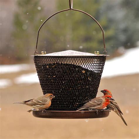 amazon com no no bronze tray bird feeder bzud00326