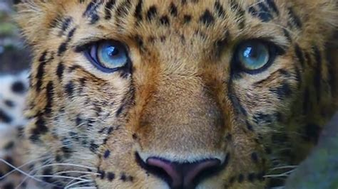 10 Amazing Portraits Of Animals by Top 10 Most Beautiful And Colorful Animals In The World