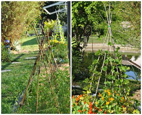 Backyard Bamboo Garden by A Nester Bamboo In The Garden