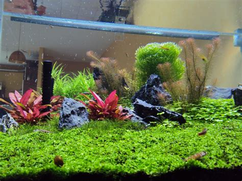 are led lights for planted aquariums how is orphek s planted tank spectrum orphek