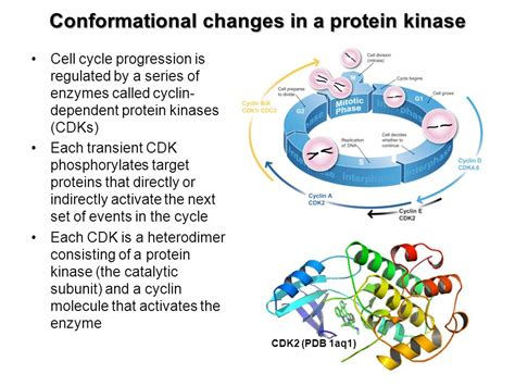 protein kinase is an enzyme that protein structure and function ppt