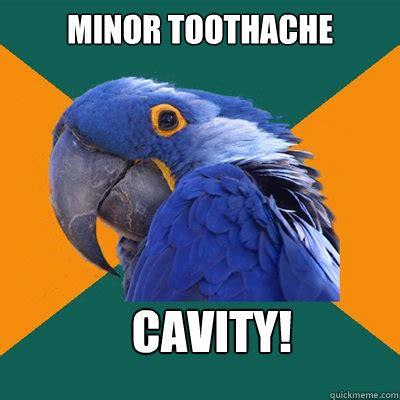 Toothache Meme - minor toothache cavity paranoid parrot quickmeme