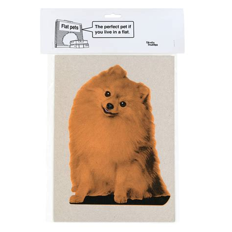 flat pomeranian cardboard flat pet pomeranian by garudio studiage notonthehighstreet