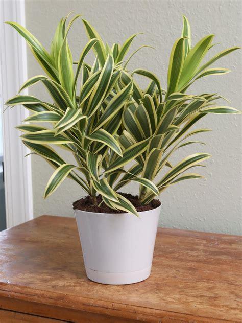 plants  grow   bathroom hgtv