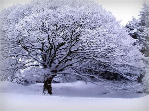 snow tree ii by glitterhead on deviantart