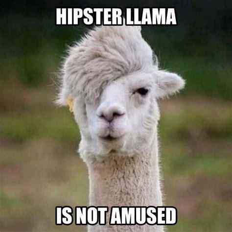 image gallery llama meme
