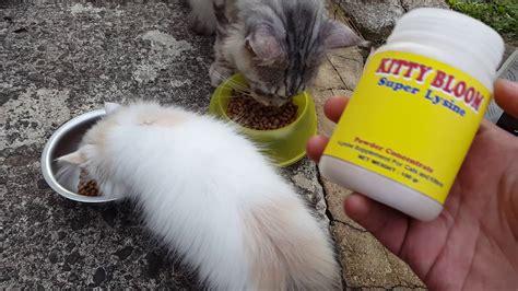 Vitamin Kucing vitamin untuk kucing sakit