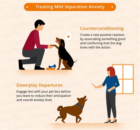 how do you a with separation anxiety severe separation anxiety in dogs 28 images severe separation anxiety in dogs