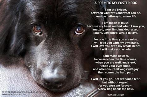 foster dogs foster poem